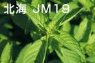 北海JM19